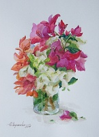 "PICTURE ""Flowers of bougainvillea"""