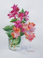 "PICTURE ""Beauty of  bougainvillea"""