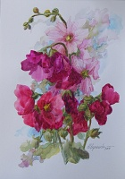 "PICTURE ""Gentle mallow"""