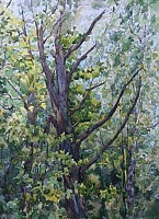 "PICTURE ""Spring Oak"""