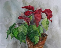"Painting ""Christmas flower"""