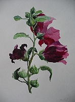 "The painting ""mallow"""