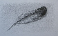 "drawing  ""Feather"""