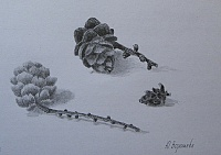 "drawing ""Pinecones"""