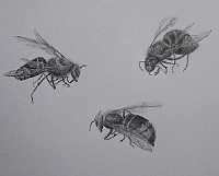"drawing ""Bees"""