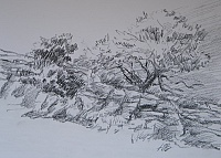 "Sketch ""Trees on the slopes"""