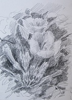 "Sketch ""Southern flowers"""