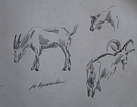 "Sketch  ""Goats"""