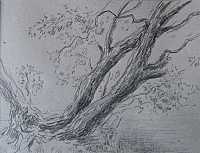 "sketch ""The trunks of willow"""