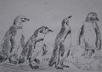 "sketch ""Penguins"""