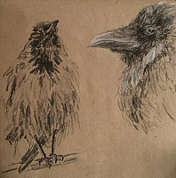 "Sketch ""Crows"""